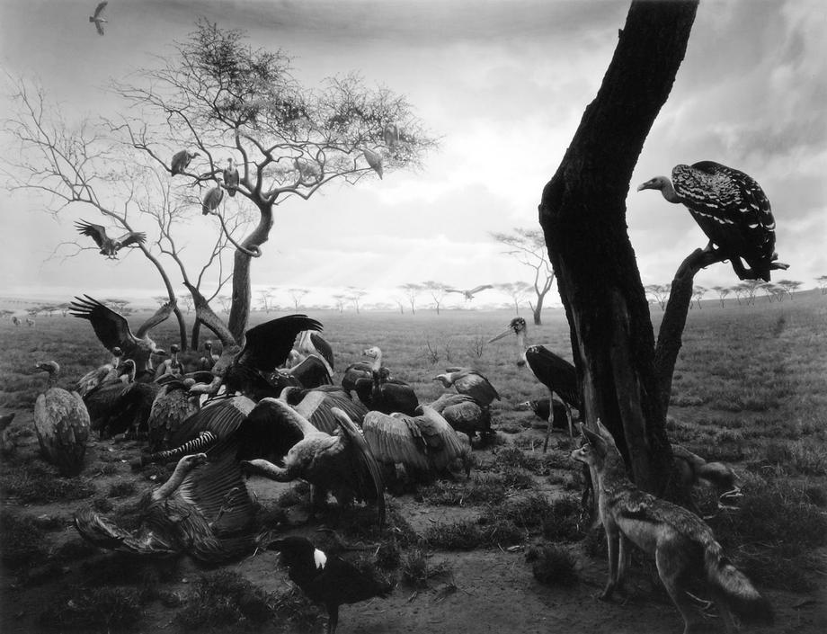 (杉本博司 《透视画馆(Dioramas)》系列,1975~1999)
